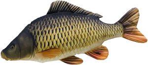 Hodowla ryb w stawach